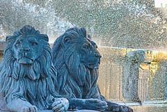 Les lions de F.Truphèmes