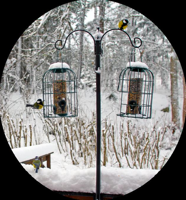 birds circle.png
