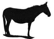 mule1.PNG