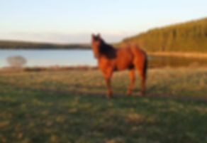 Voyage à cheval : séjour insolite retour aux sources