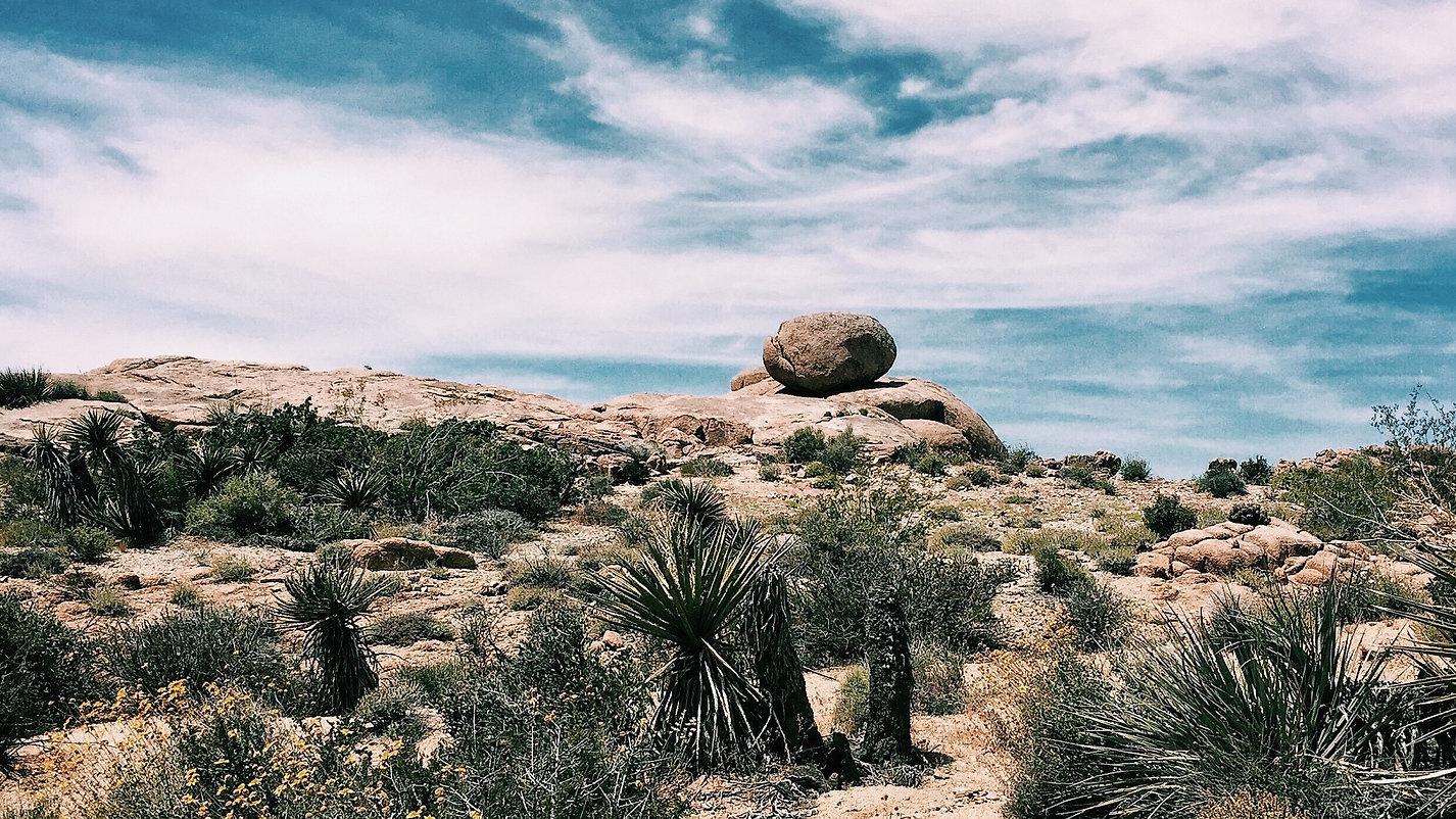 agave-arid-blue-sky-410074 (2).jpg