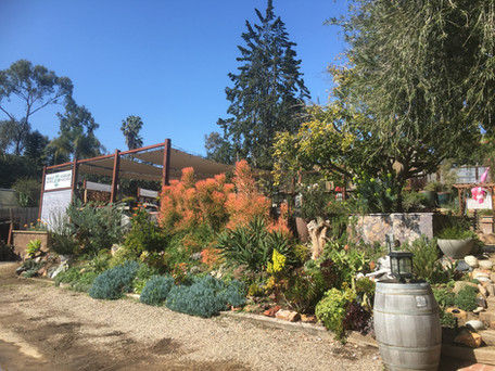 Garden Gallery1