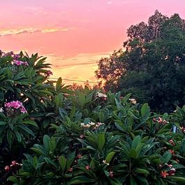 Plumeria Sunrise
