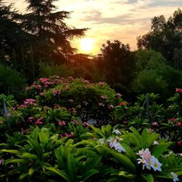 Plumeria Grove