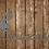 Thumbnail: Welcome Deer