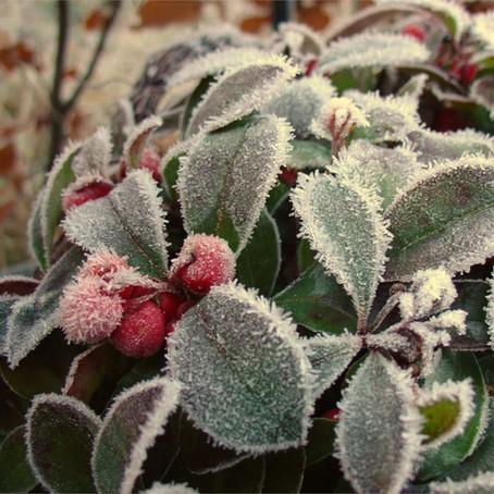 Wintertime Wild Edibles