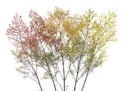 Mixed color fan