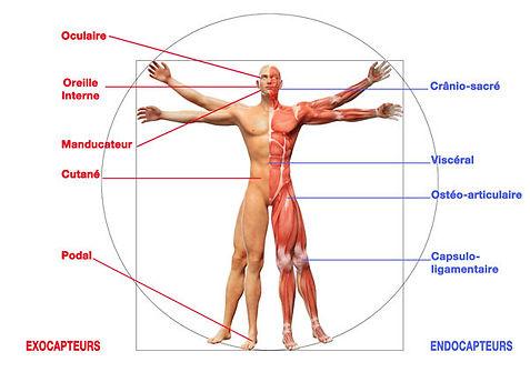 capteurs-posturaux.jpg