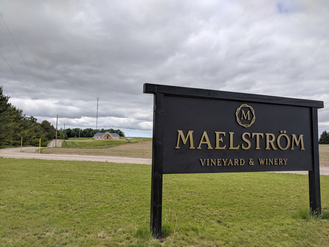 Loving the soil and grapes at Maelstrom Winery in Seaforth!
