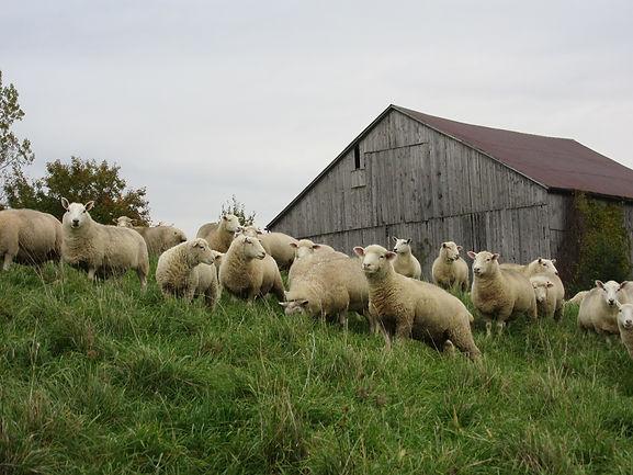 Steele Wool Farm