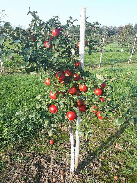 Blake's Apple Orchard