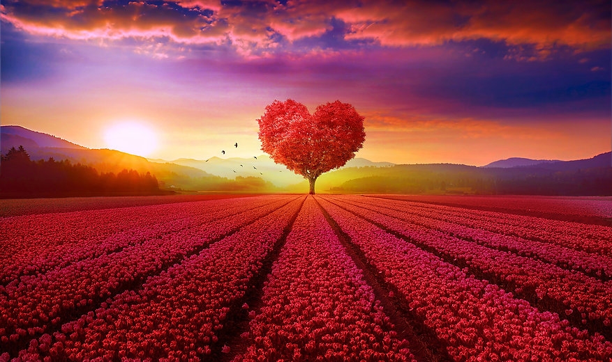 wallpapersden_com_red-heart-tree_4300x25