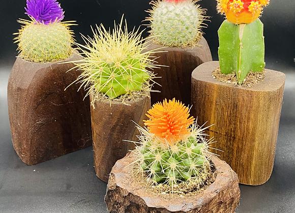 Mini Cacti Bowl