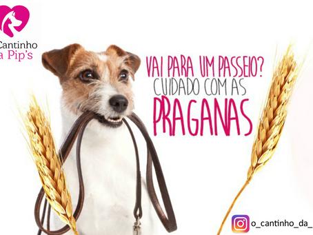 """""""PRAGANAS"""""""