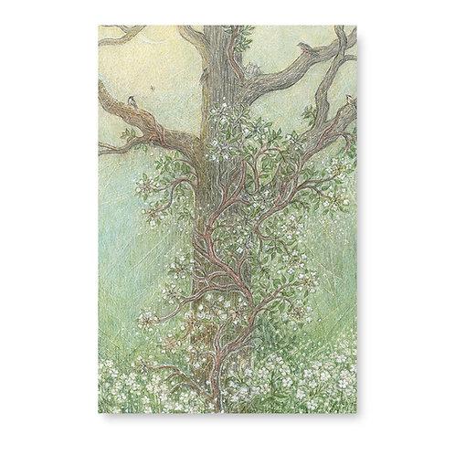 Oak and Climbing Hydrangea