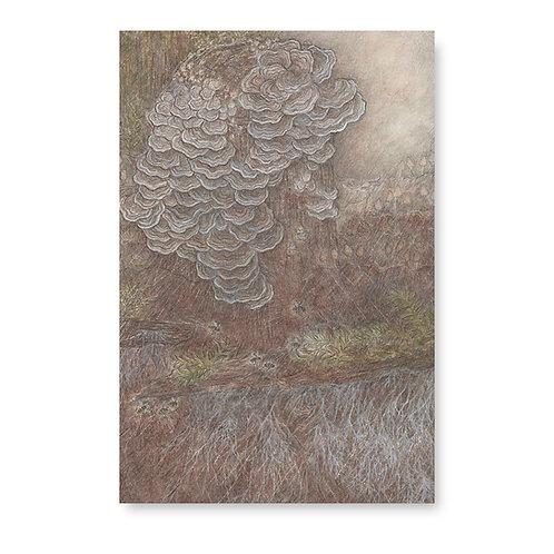 Beautiful fungus