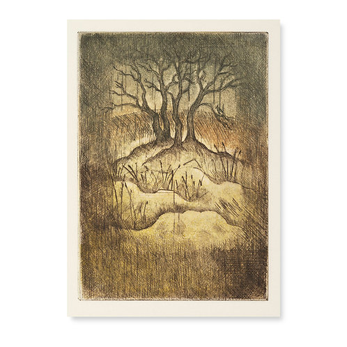"""Small Oak  5x5 1/2"""""""