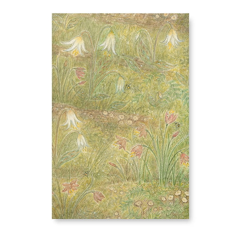 Fawn Lilies and Satin Flowers
