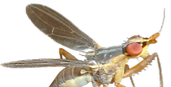 The Diptera Site_edited.png