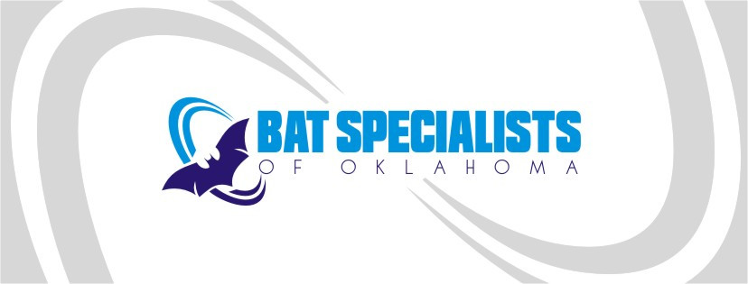 Bats Removal in Tulsa- OKC