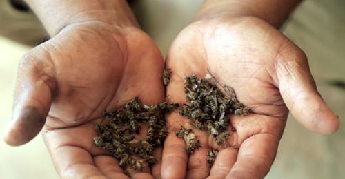 ¿Qué les pasó a las abejas? Entrevista con Adriana Otero y Robin Canil.