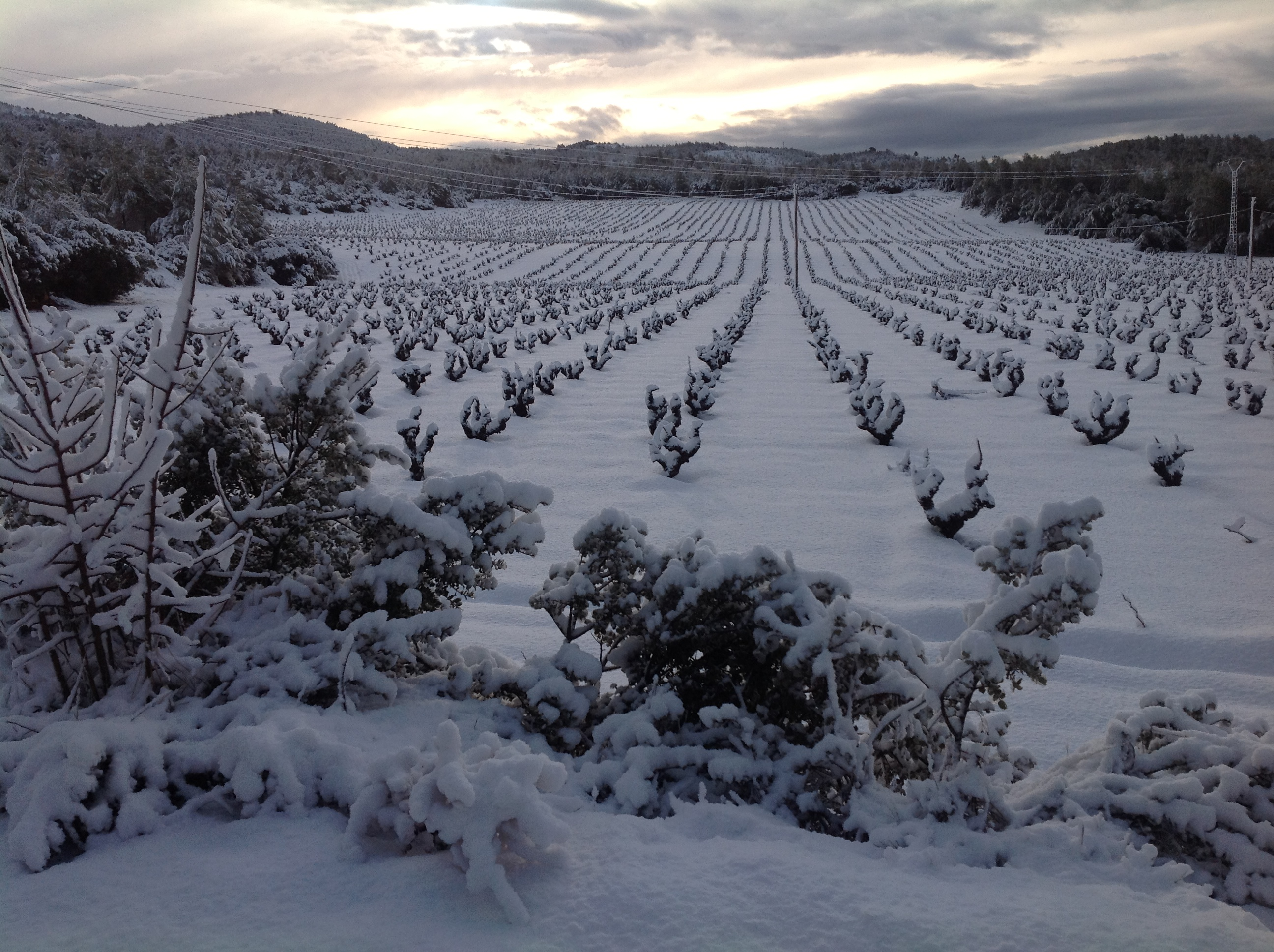 el_macho_utiel_requena_vineyards_04