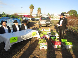 Rabbi Meir Leibowitz do Maaser