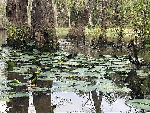 White Oak Bayou Canoe Trip  Lily Pads 9-