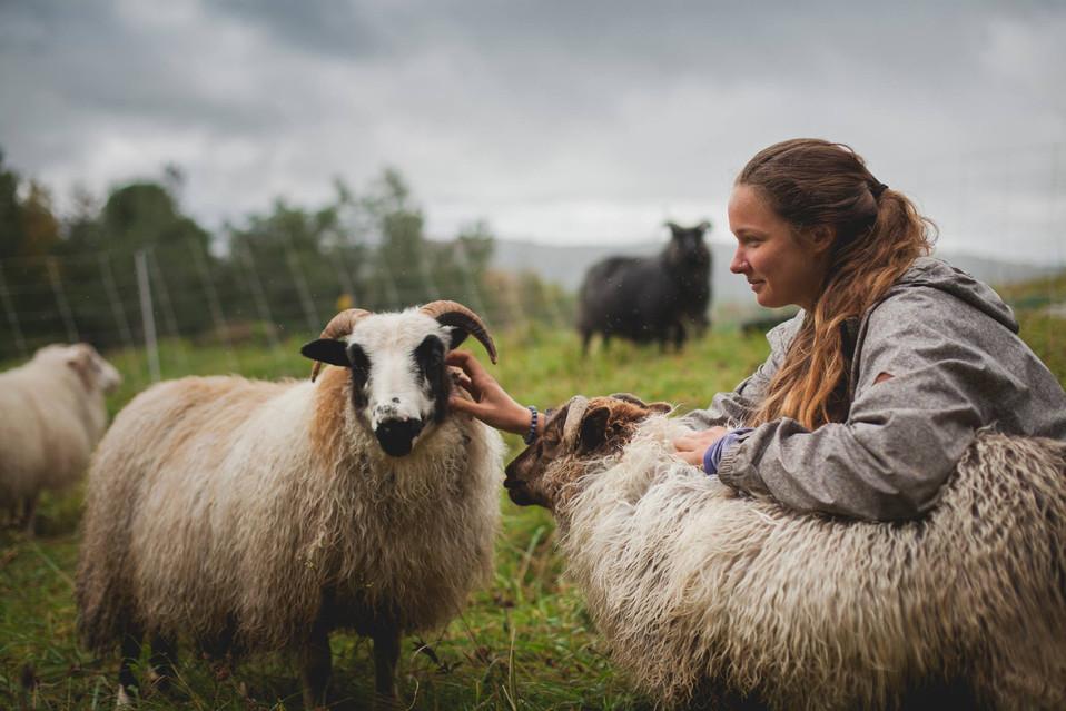 Yoga-Retreat-Vermont-sheep.jpg