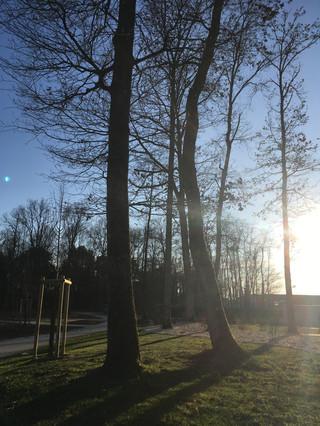 Le cimetière boisé d'Orléans La Source