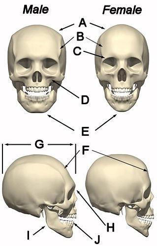 skull theory 1.jpg