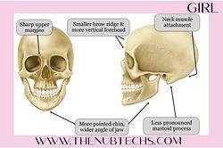 skull theory the nub techs