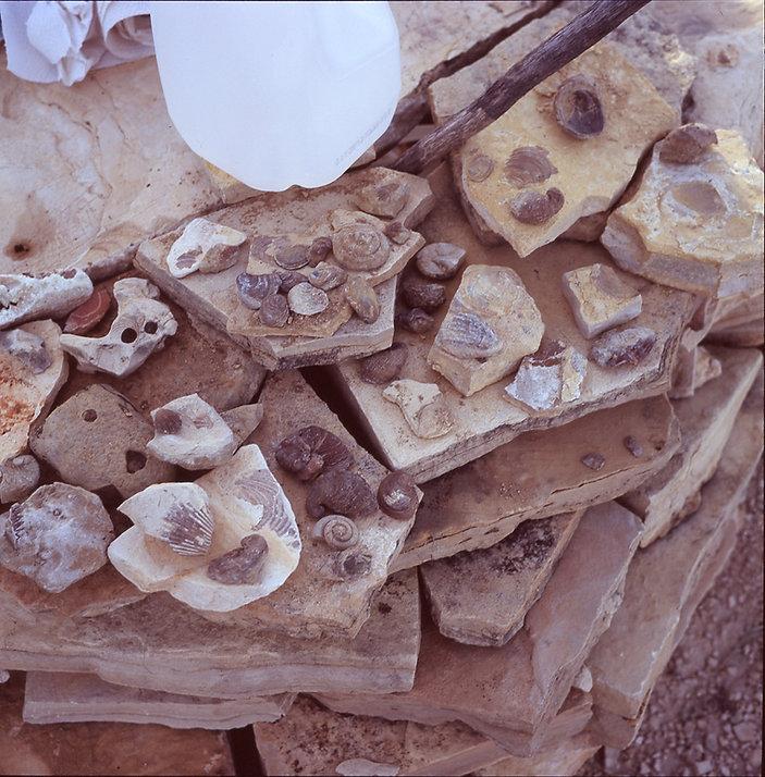 fossilsposi019.jpg