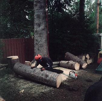 tree cutter copy.jpg