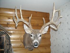 Schritter Deer 002.jpg