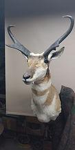 Antelope Ethan Plummer 09282019.jpg