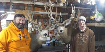 Vrbas Mule Deer.jpg