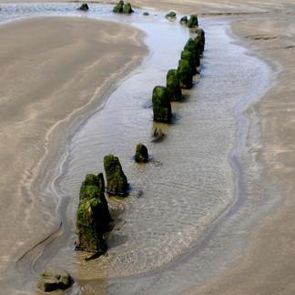 Devon Sands