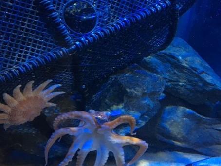 Fishy February; A-Z of a Mermaid's Friends (O)