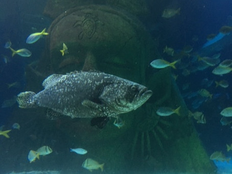 Fishy February; A-Z of a Mermaid's Friends (Q)
