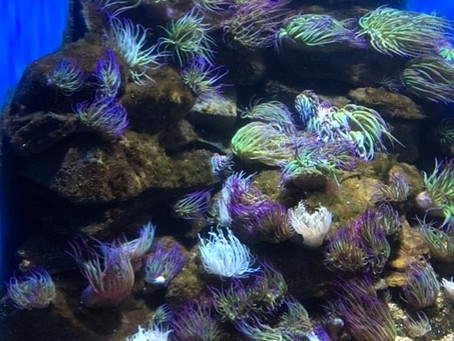 Fishy February; A-Z of a Mermaid's Friends (A)
