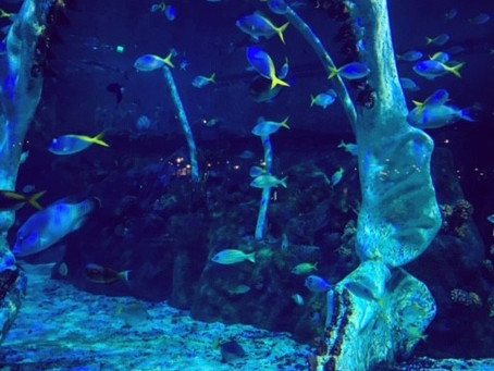 Fishy February; A-Z of a Mermaid's Friends (X)