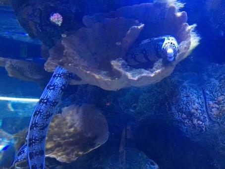 Fishy February; A-Z of a Mermaid's Friends (E)