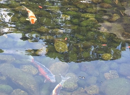 Fishy February; A-Z of a Mermaid's Friends (K)