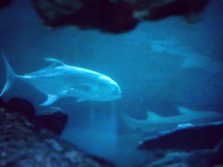 Fishy February; A-Z of a Mermaid's Friends (Y)