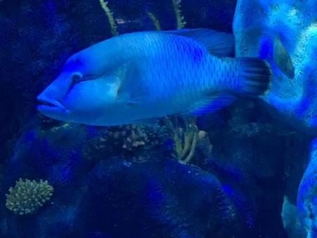 Fishy February; A-Z of a Mermaid's Friends (N)