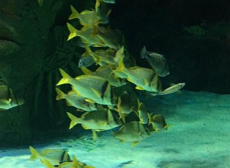 Fishy February; A-Z of a Mermaid's Friends (P)
