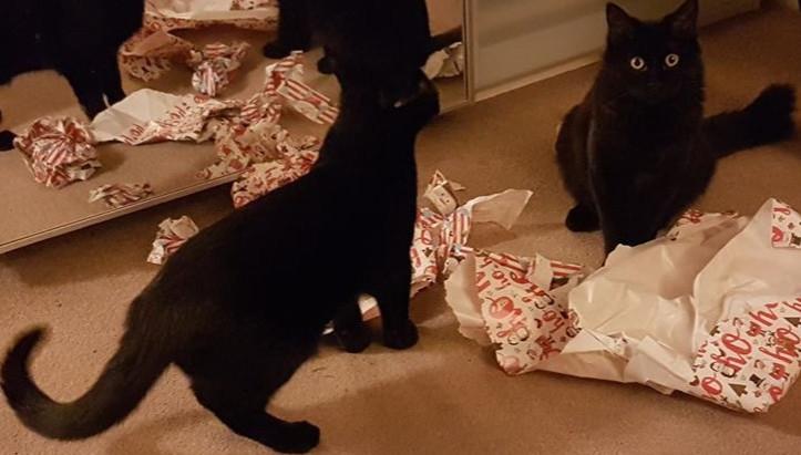 Life Chez Dee Episode #42: Pesky Kittens
