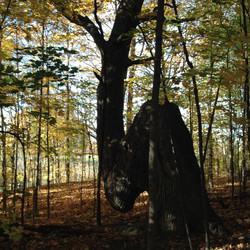 Trail Marker Tree at Kingsville Golf