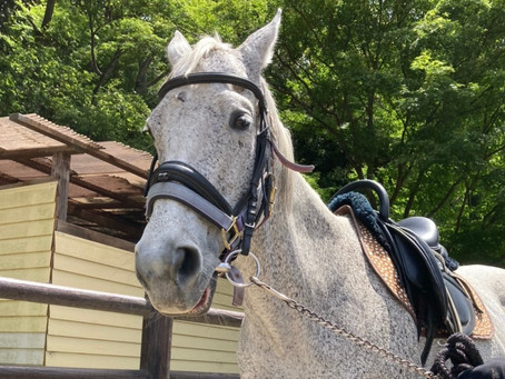 乗馬の夏期営業時間のご案内